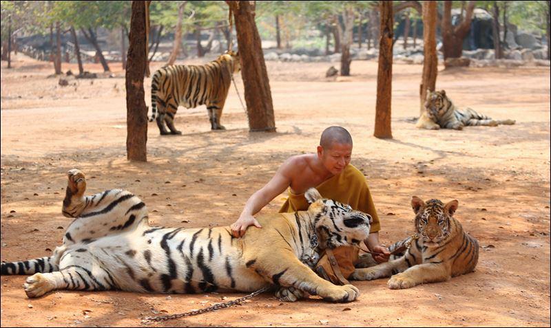 thailand-tiger-temple