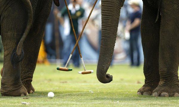 elephant-polo-tournament