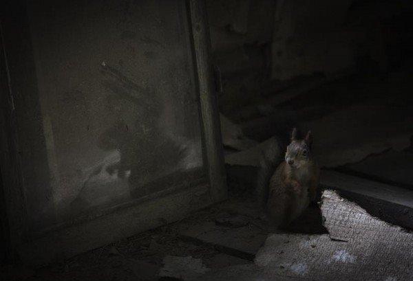 squirrel-by-dusty-mirror